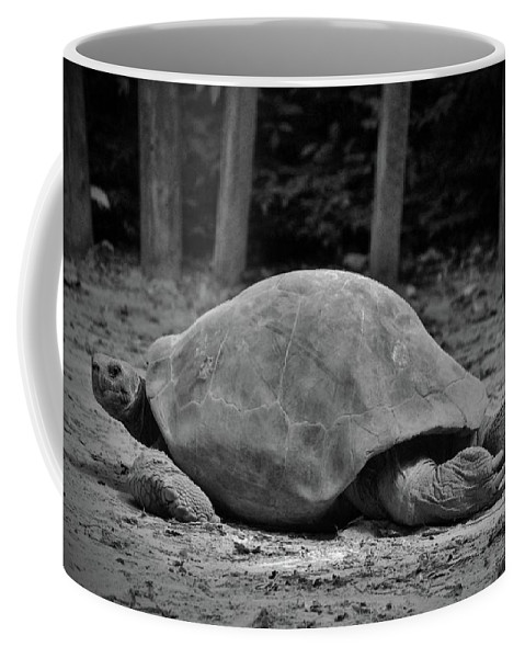 Black And White Coffee Mug featuring the photograph Tortoise Relaxing by Cynthia Guinn