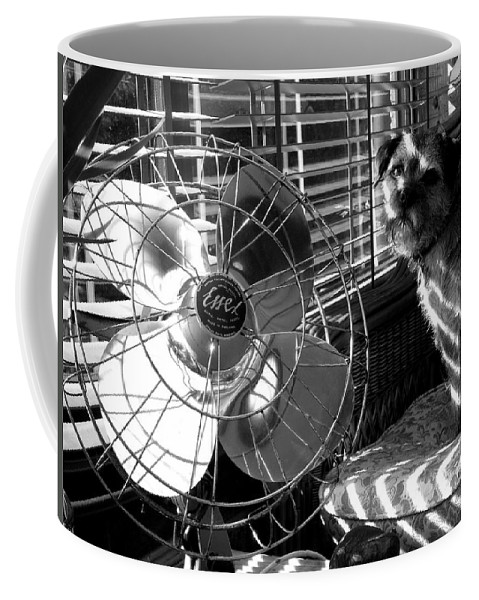 Electric Fan Coffee Mug featuring the photograph Toto Checks In by Charles Stuart