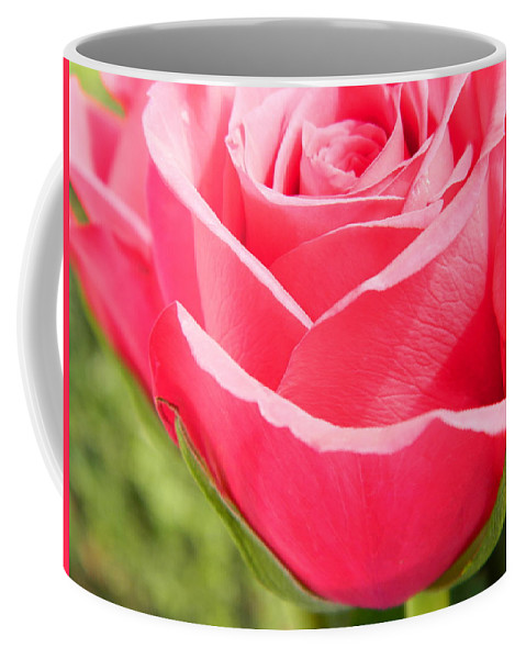 Roses Coffee Mug featuring the photograph Touched By The Sun by Arlane Crump