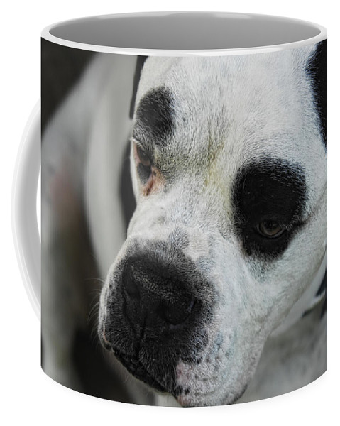 Bull Dog Coffee Mug featuring the photograph Tough Guy by Donna Blackhall
