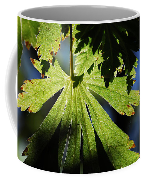Leaf Coffee Mug featuring the photograph Toward The Secret Garden by Donna Blackhall
