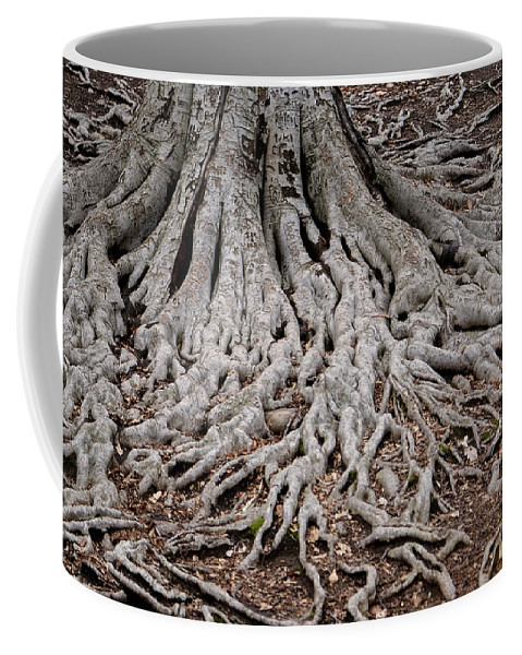 Tree Coffee Mug featuring the photograph Tracing My Roots by Jean Haynes