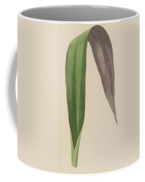 Tradescantia Odoratissima Coffee Mug featuring the painting Tradescantia Odoratissima by English School