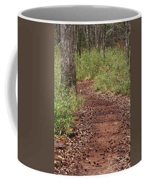 Walking Trail Photographs Coffee Mug featuring the photograph Trail To Beauty by Kim Henderson