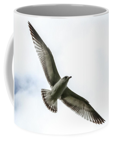 Ring-billed Gull Coffee Mug featuring the photograph Transparency by Norman Johnson