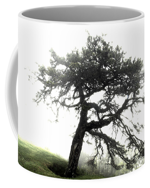 Hdr Coffee Mug featuring the photograph Tree by Alex Grichenko