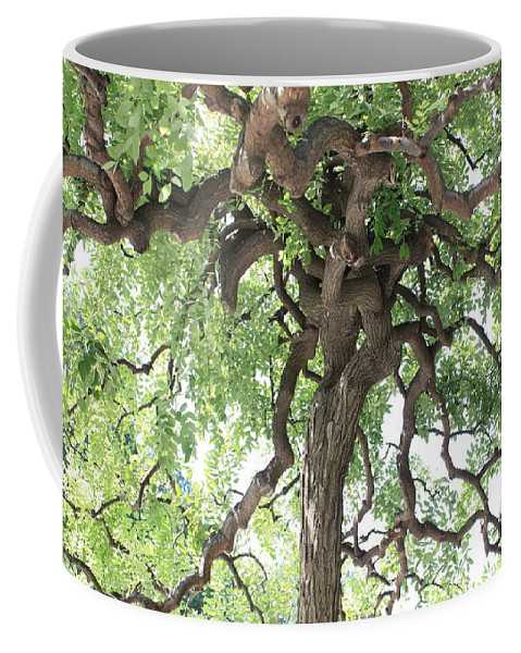 Tree Coffee Mug featuring the photograph Tree At Ming Tombs by Carol Groenen