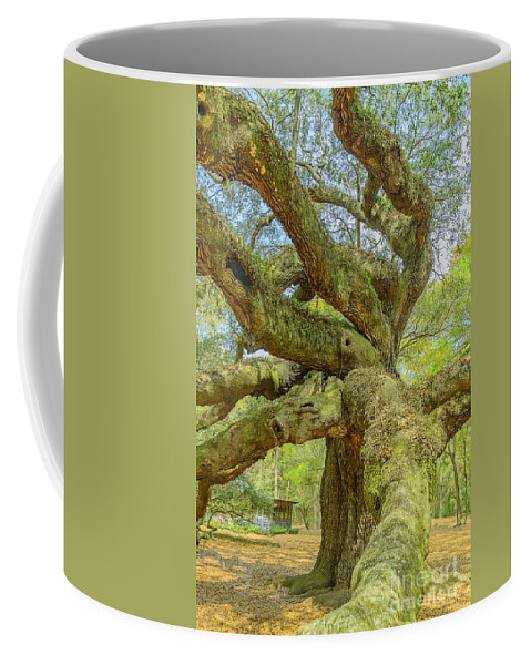 South Carolina Coffee Mug featuring the photograph Tree For The Ages by Elvis Vaughn