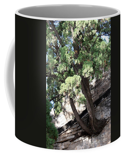 China Coffee Mug featuring the photograph Tree Growing Through Wall by Carol Groenen
