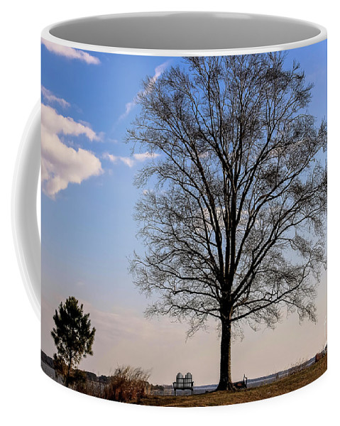 Tree Coffee Mug featuring the photograph Tree In The Morning Light by Amy Sorvillo