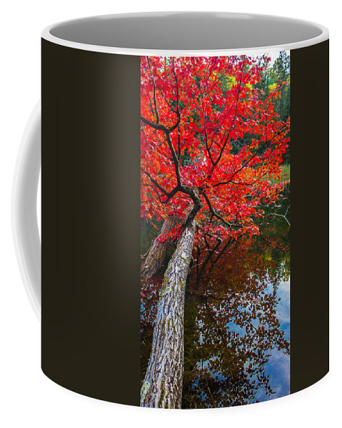 Maple Coffee Mug featuring the photograph Tree In The Pond by Tim Kirchoff