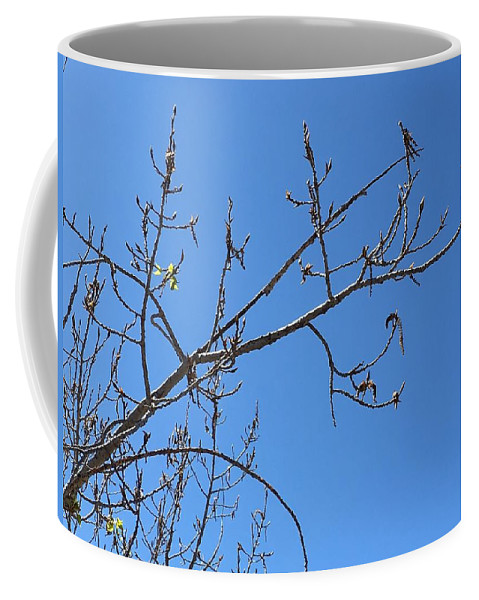 Nature Coffee Mug featuring the photograph Tree Of New Life by Phyllis Bradd