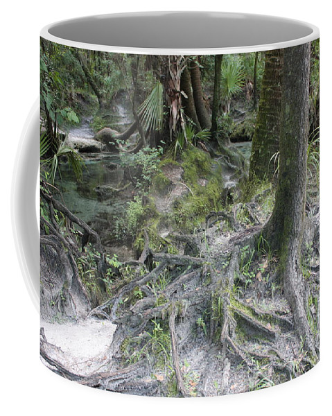 Lithia Springs Coffee Mug featuring the photograph Tree Roots And Lithia Springs by Carol Groenen
