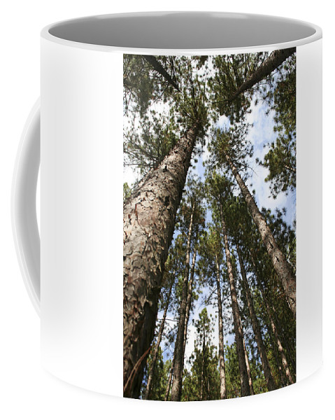 Autumn Coffee Mug featuring the photograph Tree Stand by Margie Wildblood
