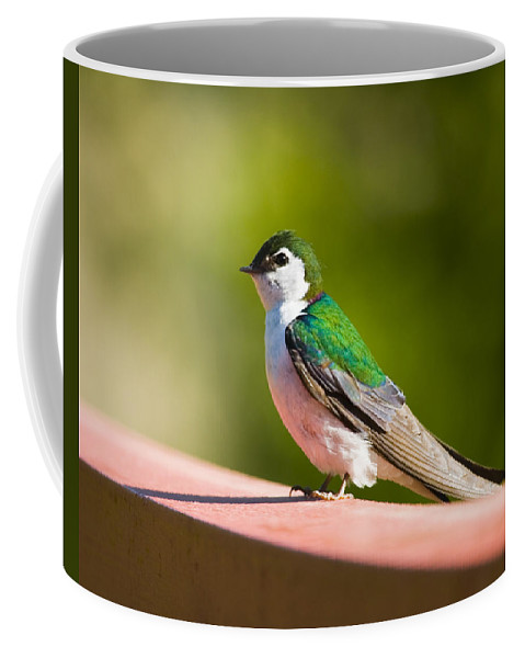 Bird Coffee Mug featuring the photograph Tree Swallow by Karen Ulvestad