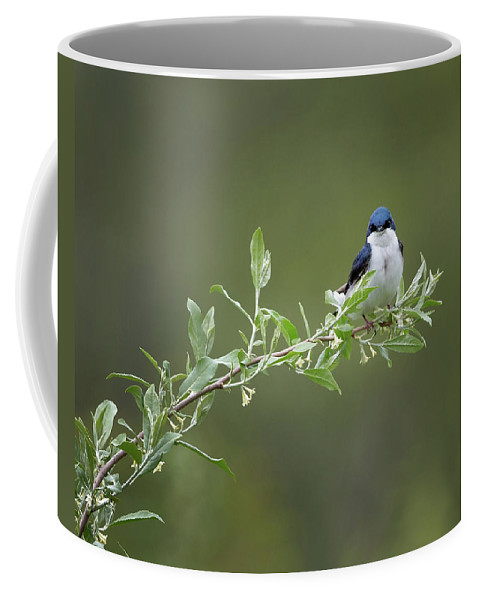 Tree Swallow Coffee Mug featuring the photograph Tree Swallow Male by Bill Wakeley