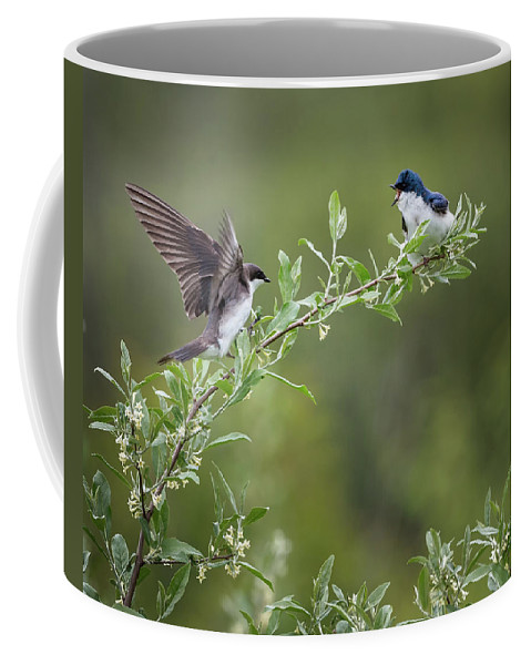 Tree Swallow Coffee Mug featuring the photograph Tree Swallows by Bill Wakeley
