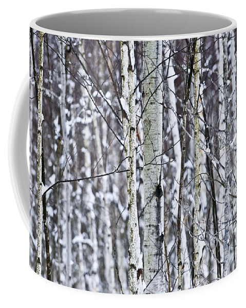 Winter Coffee Mug featuring the photograph Tree Trunks Covered With Snow In Winter by Elena Elisseeva
