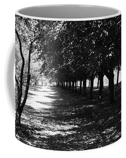 Trees Coffee Mug featuring the photograph Trees In Chicago by Lauri Novak