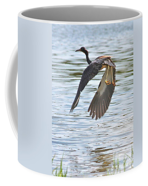 Bird Coffee Mug featuring the photograph Tri Colored Heron Over The Pond by Carol Groenen