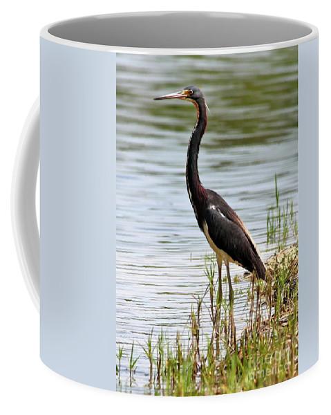 Bird Coffee Mug featuring the photograph Tricolored Heron by Carol Groenen