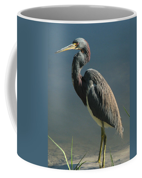 Nature Coffee Mug featuring the photograph Tricolored Heron by Peg Urban