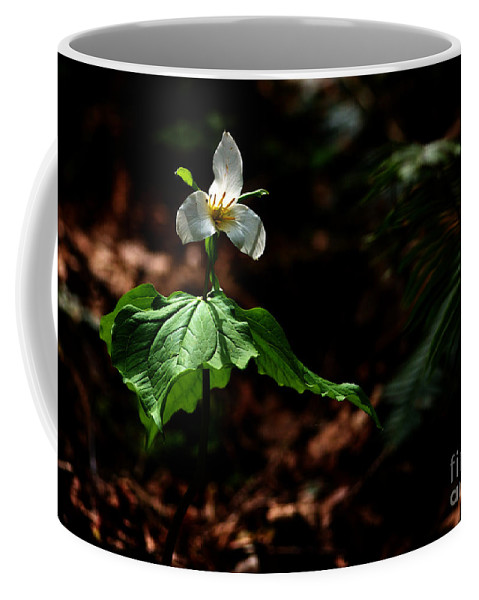 Trillium Coffee Mug featuring the photograph Trillium in the Woods by Sharon Talson