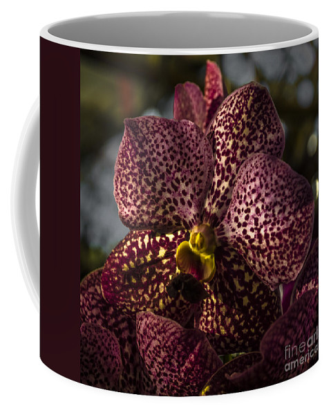 Michelle Meenawong Coffee Mug featuring the photograph Tropical Beauty by Michelle Meenawong