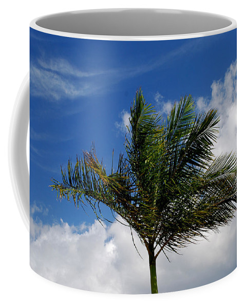 Palm Tree Coffee Mug featuring the photograph Tropical Breeze by Gary Wonning