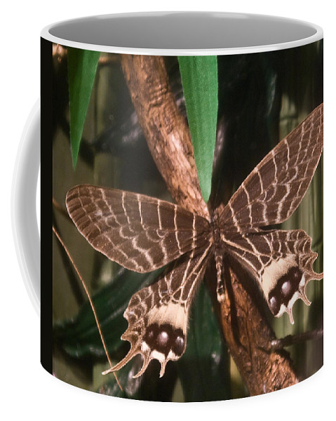 Butterfly Coffee Mug featuring the photograph Tropical Butterfly by Douglas Barnett