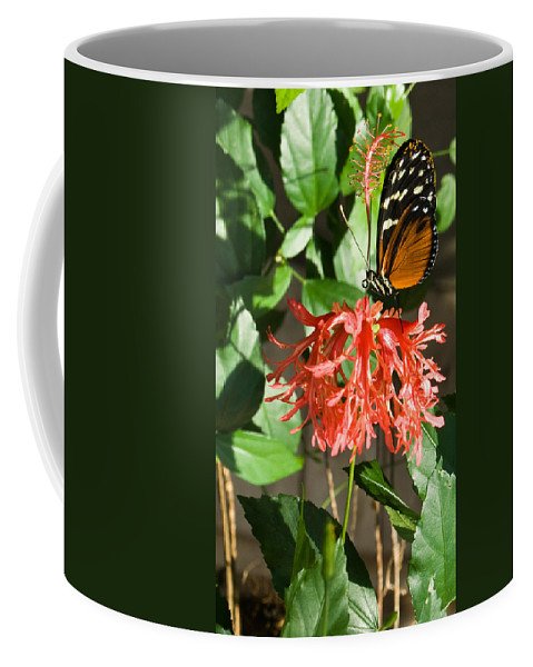 Tropical Coffee Mug featuring the photograph Tropical Butterfly On Flower by Douglas Barnett