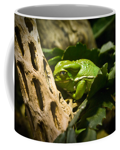 Amphibian Coffee Mug featuring the photograph Tropical Green Frog by Douglas Barnett