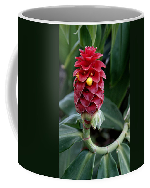 Flower Coffee Mug featuring the photograph Tropical by Jean Haynes