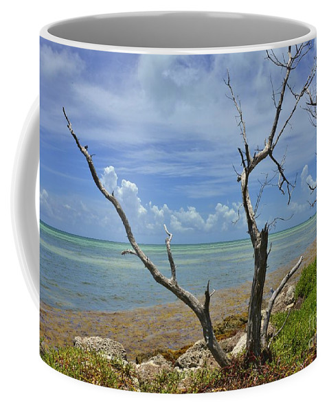 Keys Coffee Mug featuring the photograph Tropical Oasis by Lisa Renee Ludlum
