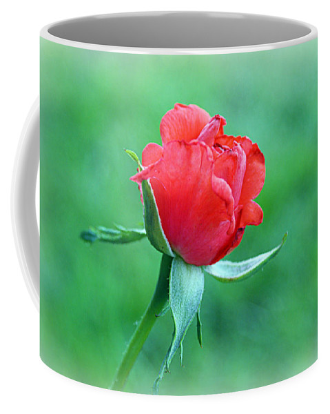 Tropicana Coffee Mug featuring the photograph Tropicana by Cricket Hackmann