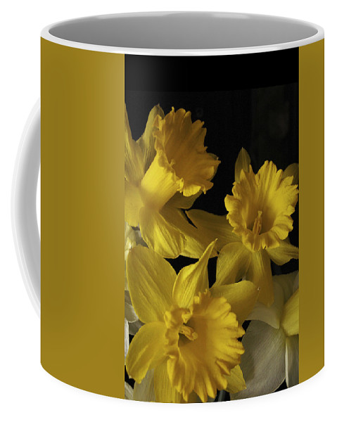 Macro Coffee Mug featuring the photograph Trumpet Daffodils by Nancy Griswold