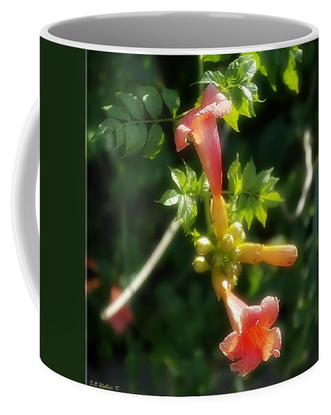 2d Coffee Mug featuring the photograph Trumpet Flower by Brian Wallace