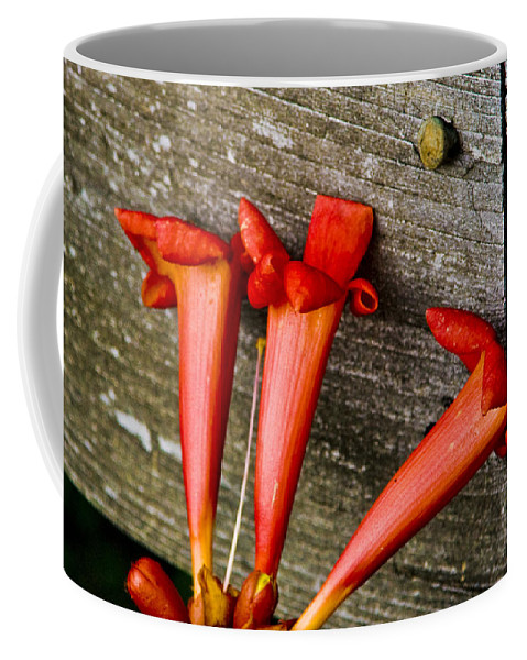 Trumpet Coffee Mug featuring the photograph Trumpets On The Fence by Ches Black