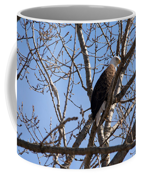 Bald Eagle Coffee Mug featuring the photograph Tucked In by Linda Kerkau