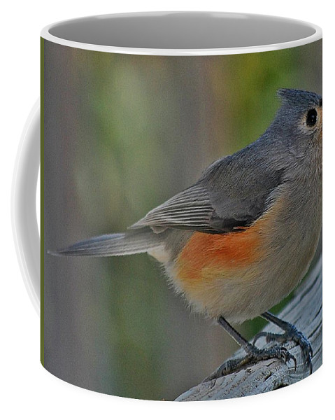 Bird Coffee Mug featuring the photograph Tufted Titmouse by Dirk Fecho
