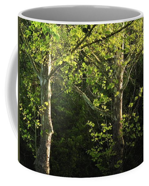 Maple Coffee Mug featuring the photograph Branches Of Lovely Light by Laura Ragland