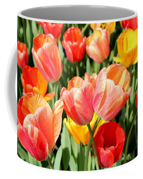 Flower Coffee Mug featuring the photograph Tulip Crossing by Deborah Crew-Johnson