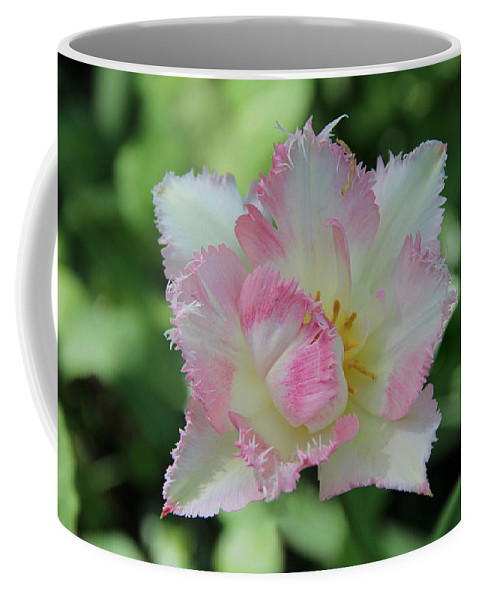 Tulip Galerie Poster Coffee Mug featuring the photograph Tulip Galerie by Sergey Lukashin