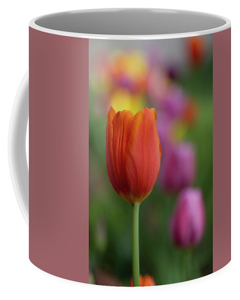 Flowers Coffee Mug featuring the photograph Tulip In The Garden by Marie Leslie