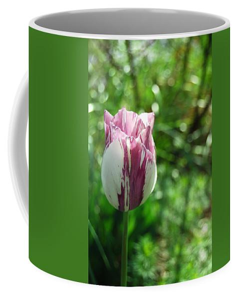 Tulip Coffee Mug featuring the photograph Tulip Morn by Trish Hale