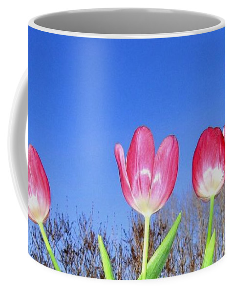 Tulips Coffee Mug featuring the photograph Tulip Panorama by Will Borden