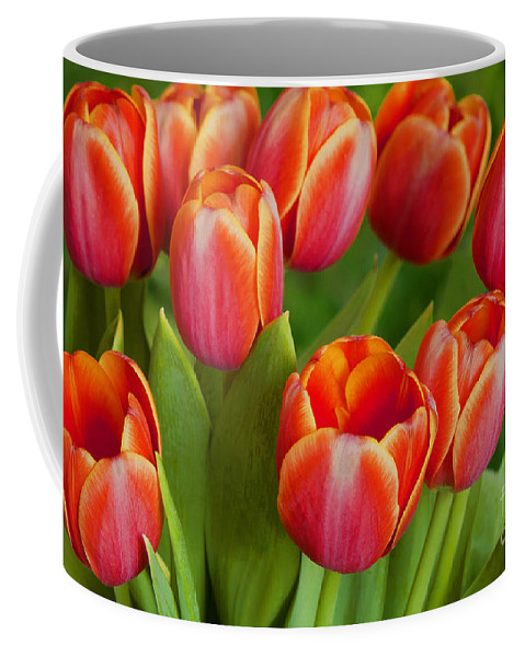 Tulips Coffee Mug featuring the photograph Tulip Patch by Regina Geoghan