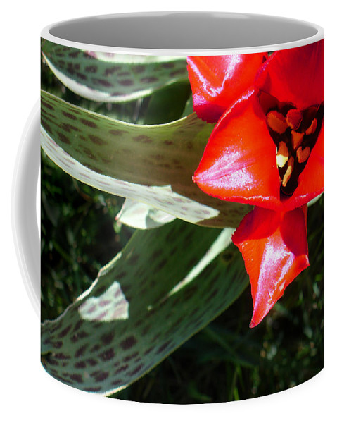 Tulip Coffee Mug featuring the photograph Tulip by Steve Karol