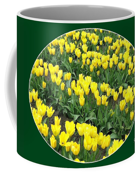 Agriculture Coffee Mug featuring the photograph Tulip Town 2 by Will Borden