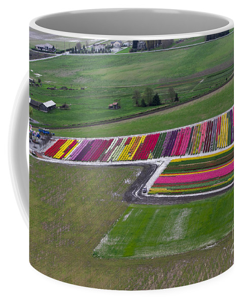 Tulip Coffee Mug featuring the photograph Tulip Town Aerial by Louise Magno
